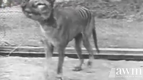 Footage Of Last One Of This Creature In Existence Just Released, See Before It's Deleted