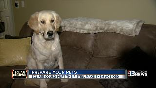 How to prepare your pets for the solar eclipse - Video