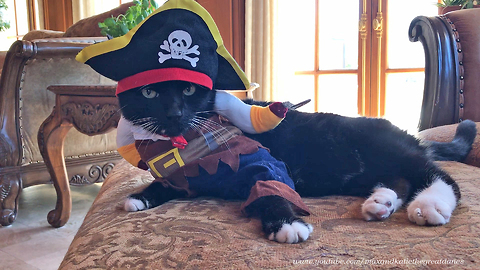 Cat's mood perfectly resembles Halloween costume