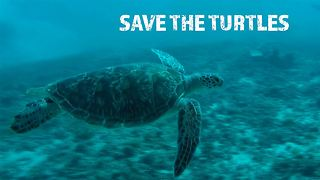 Hatching a better future for Bali's sea turtle babies - Video