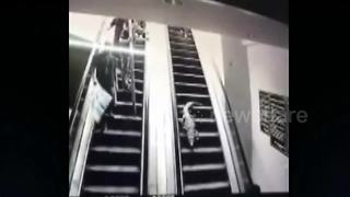 Runaway crocodile walks down supermarket escalator - Video