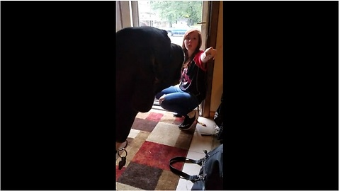 Great Dane Argues With Teenager About Playtime