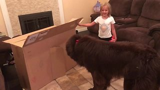 Dog is too big for little girl's playhouse - Video