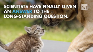 Who's smarter, dogs or cats? Science has spoken - Video