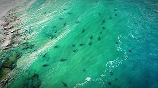 Sharks Congregate in Mediterranean Off Northern Israel - Video