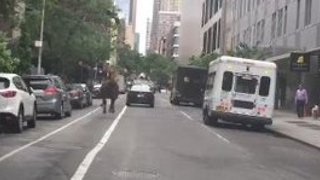 Escaped Horse Runs Down NYC Street - Video