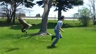 Defensive goose chases away intruding humans - Video