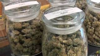 Wellington could be next PBC municipality to allow medical marijuana dispensaries - Video