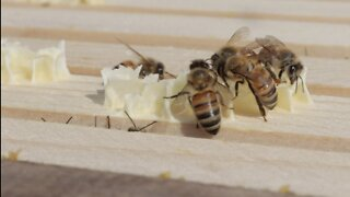 How to pick plants that keep bees buzzing