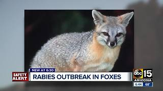 Apache Junction residents attacked by rabid fox outside home - Video
