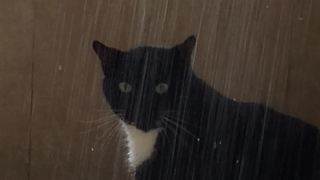 Sid the cat loves taking showers