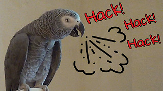 Sympathetic parrot reacts to owner's cough - Video