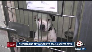 Indianapolis Animal Care Services is encouraging pet owners to get their animals spayed and neutered