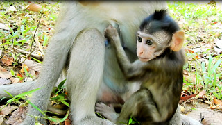 Baby Monkey Vino Stay With Selly Now