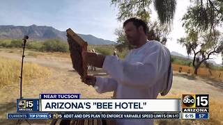 Arizona's Miraval Resort near Tucson part of 'bee hotel' trend - Video