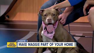 Jan. 14 Rescues in Action:  Make Maggie a part of your household - Video