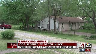 KCK police investigating dog stabbed to death - Video