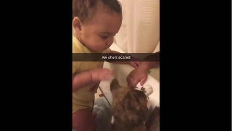 Baby hesitantly pets new puppy addition