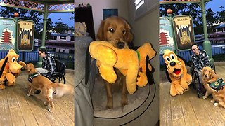 Dog Meets Pluto At Disney World - Video
