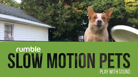 Check out this compilation of pets filmed in epic slow motion!