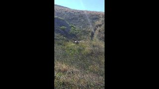 Poor pooch wipes out while running down a hill - Video