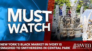 New York's black market in ivory is smashed to smithereens in Central Park - Video