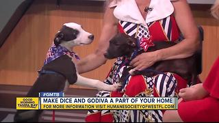 July 2 Rescues in Action: Dice and Godiva needs forever homes - Video