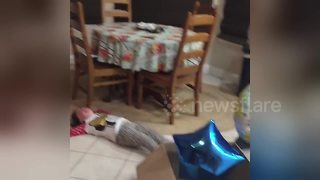 Little Girl Has Hilarious Meltdown After Baby Gender Reveal