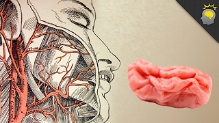 Stuff to Blow Your Mind: Your Brain on Gum - Science on the Web - Video