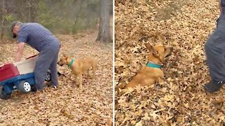 Energetic dog loves to go leaf surfing