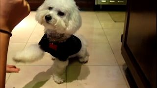 Clever Dog Is A Math Genius - Video
