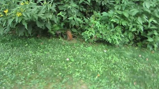Squirrel fails trying to run away!