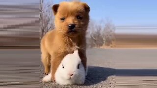 Two little friends: A puppy and a bunny