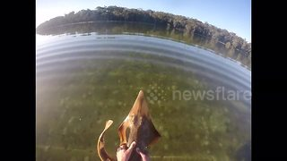 Man catches shovelnose shark with his bare hands - Video