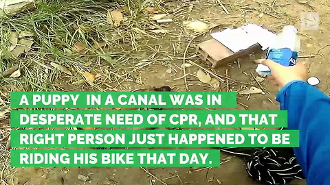 Cyclist Finds Puppy in Canal Nearly Dead, Rushes to Bring Pup Back to Life
