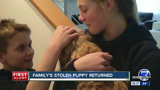 Dog stolen from front yard reunited with family five days later