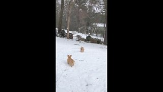 Dog stick trick: pup breaks and catches broken stick