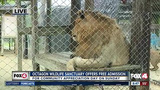 Octagon Wildlife Sanctuary holds community appreciation day on Sunday