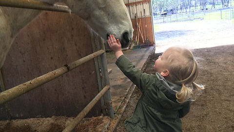 Toddler has a very serious conversation with a horse