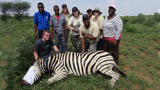 Zebra Saved From Deadly Snare Hold: WILDEST ANIMAL RESCUES