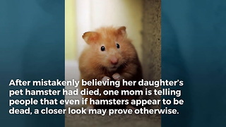 Mom Shares Story About Daughter's 'Dead' Hamster, Now People are Second-Guessing Their Own Pets' Burials - Video