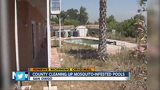 County cleaning up mosquito-infested pools - Video