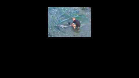 Good Samaritans Help Dolphins Trapped in Shallow Water