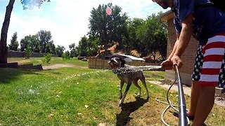 Just a Dog Drinking From a Hose - Video