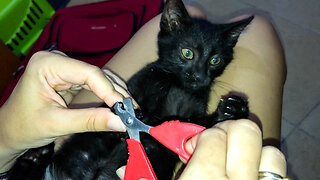 Sleepy Kitten Allows Owner To Clip His Nails