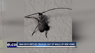 Beetles crawl through walls of brand new Treasure Valley home