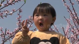 Peach blossoms attract tourists to eastern China