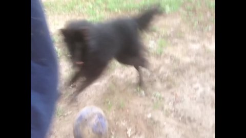 Dog and Owner Jumping Together is the Best thing you'll see Today