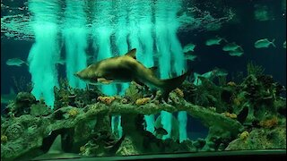 Odysea Aquarium Scottsdale Arizona Best Indoor Aquarium