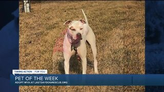 Meet Mya our Pet of the Week